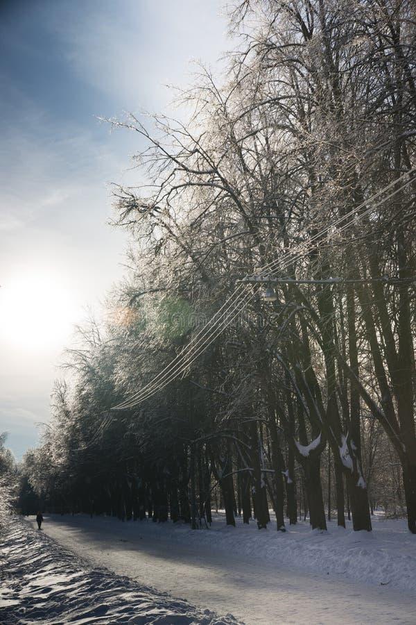 staden nära den järnväg vägen skiner snowsunen för att övervintra trä royaltyfria bilder