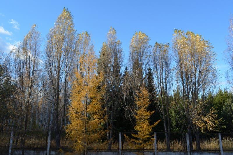 Staden parkerar i h?st Blandade landningar med lövfällande och vintergröna träd royaltyfria foton