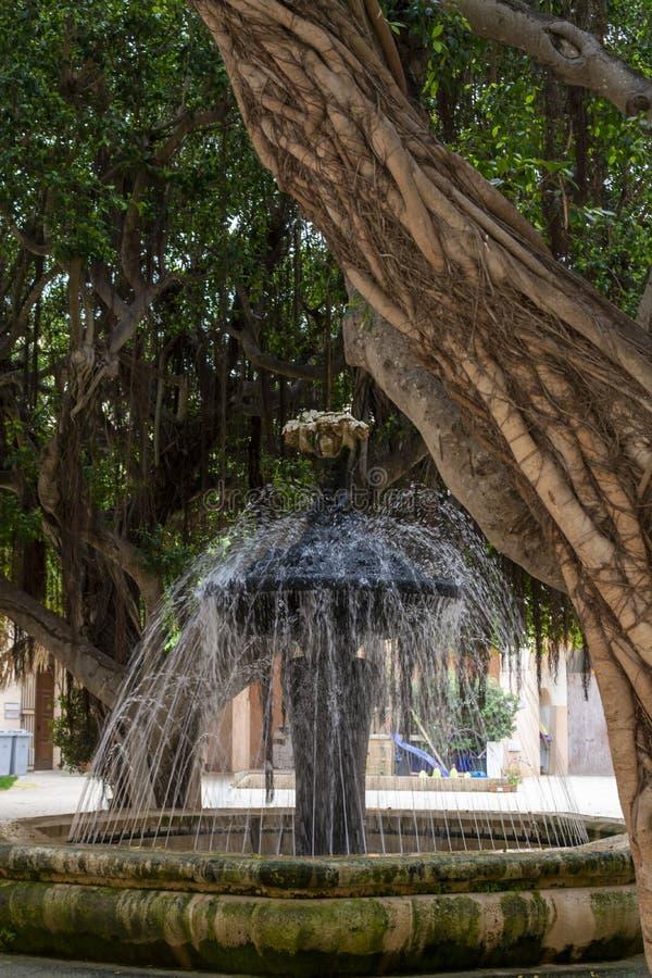 Staden parkerar i marsala med gamla stora fikusbanyanträd för skugga i sommartid, Italien royaltyfria bilder