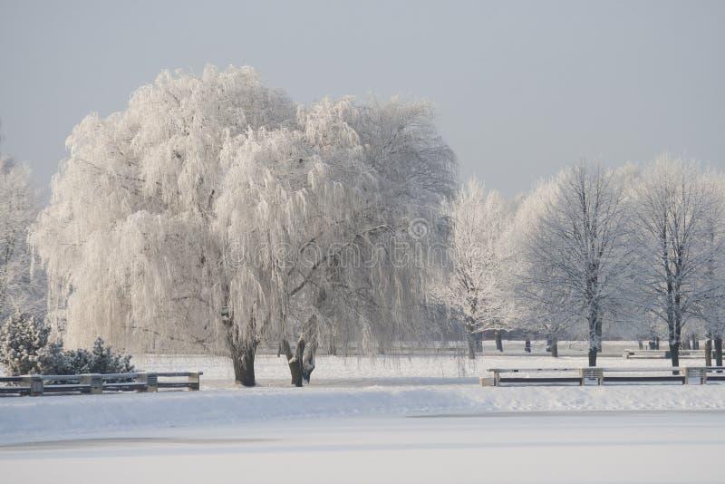 Staden parkerar i vinter royaltyfri bild