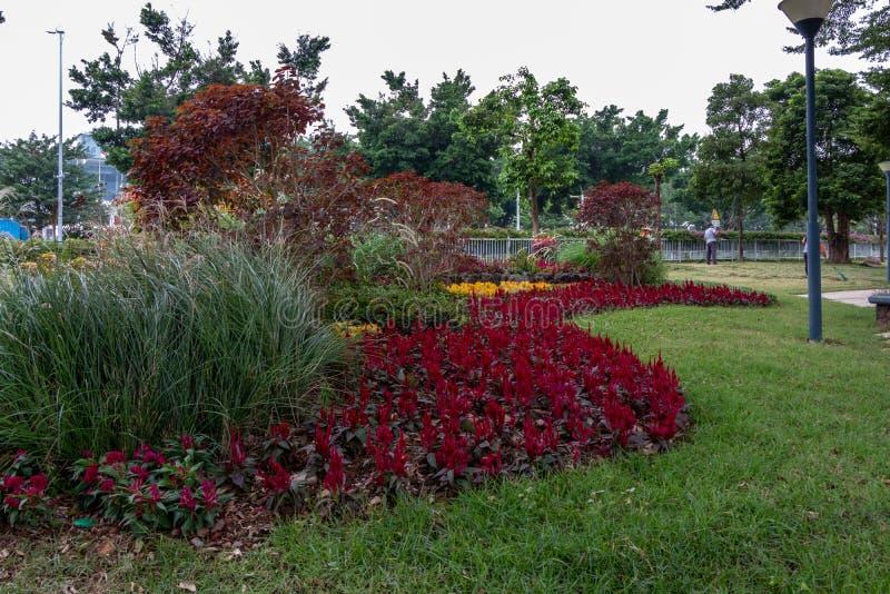 Staden parkerar med en grön gräsmatta Gröna buskar av träd Folkarbete i trädgården royaltyfri fotografi