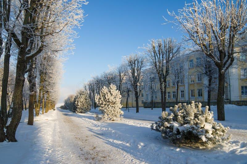 Staden parkerar med träd som täckas med rimfrost royaltyfria bilder