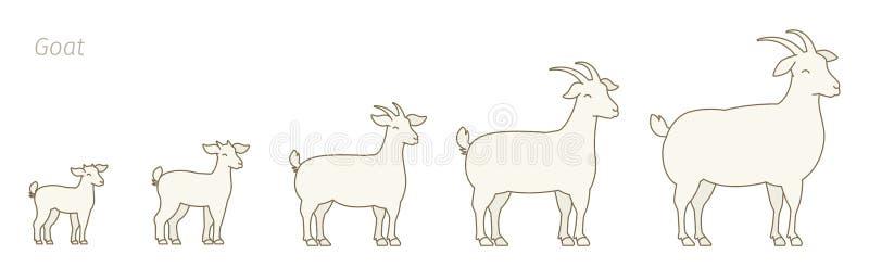 Stadia van de reeks van de geitengroei dierlijk Landbouwbedrijf De productie van de het fokkenwol het opheffen Het lam groeit ani stock illustratie
