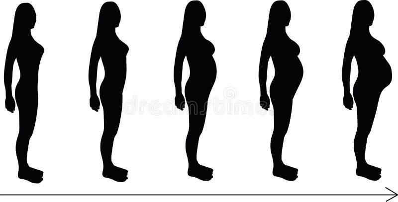 Stadien der Schwangerschaft stockbild