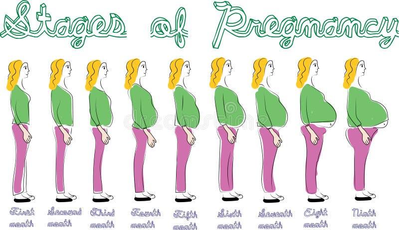 Stadien der Schwangerschaft stockfotos