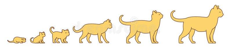 Stadien des Katzenwachstumssatzes Vom Kätzchen zur erwachsenen Katze Tierhaustiere Pussy wachsen Animationsweiterentwicklung hera vektor abbildung