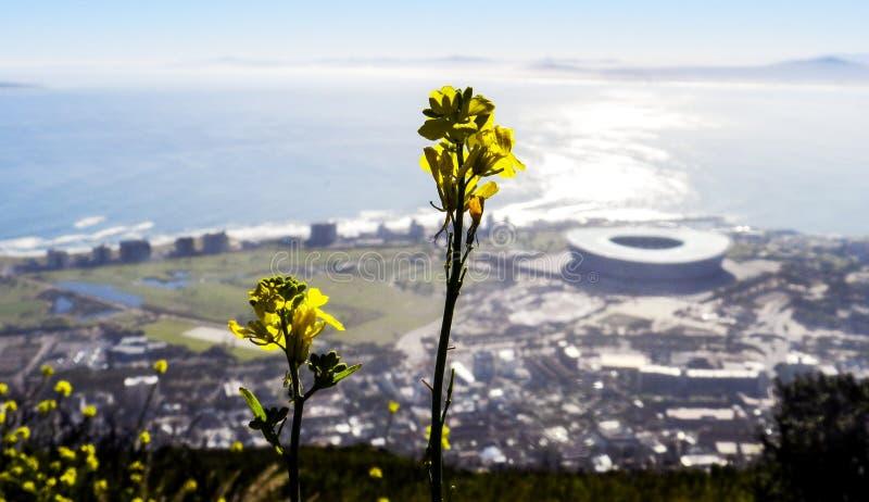 Stadio di Cape Town dall'altro lato immagine stock