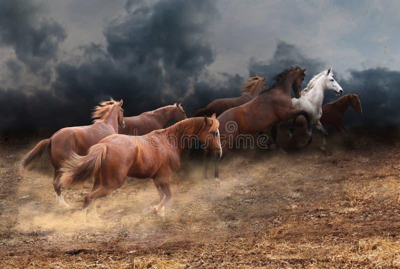 Stado dzicy konie fotografia stock