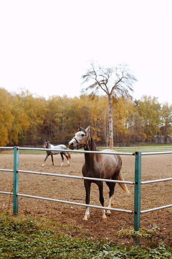 Stado konie na naturze w położenia słońcu Zwierzęta odpowiadają tło obraz royalty free