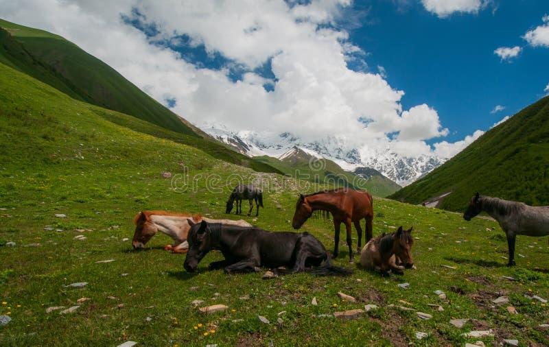 Stado konie na zielenieje pole w górach. obraz stock