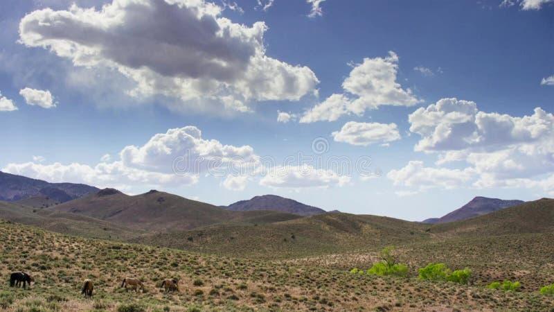Stado konie w górach Konie pasa w łące przeciw niebieskiemu niebu fotografia royalty free