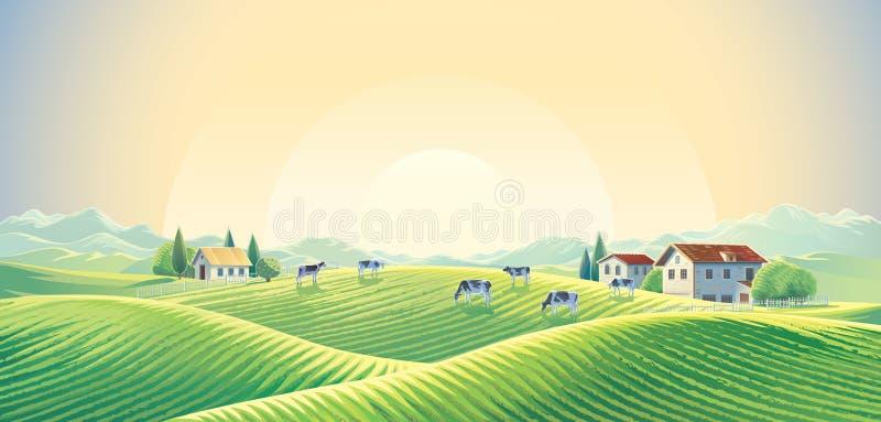 Stado krowy w lato wiejskim krajobrazie ilustracji
