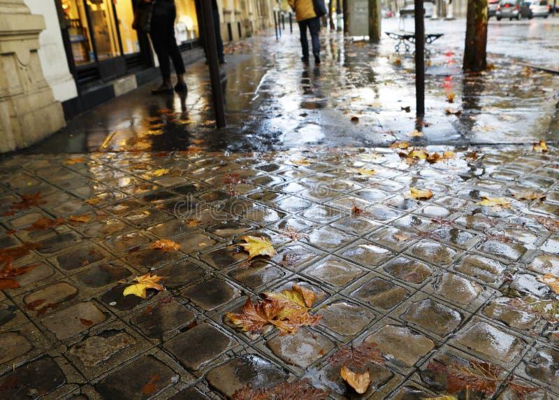 Stads- bakgrund med höstsidor på våt trottoar royaltyfri fotografi