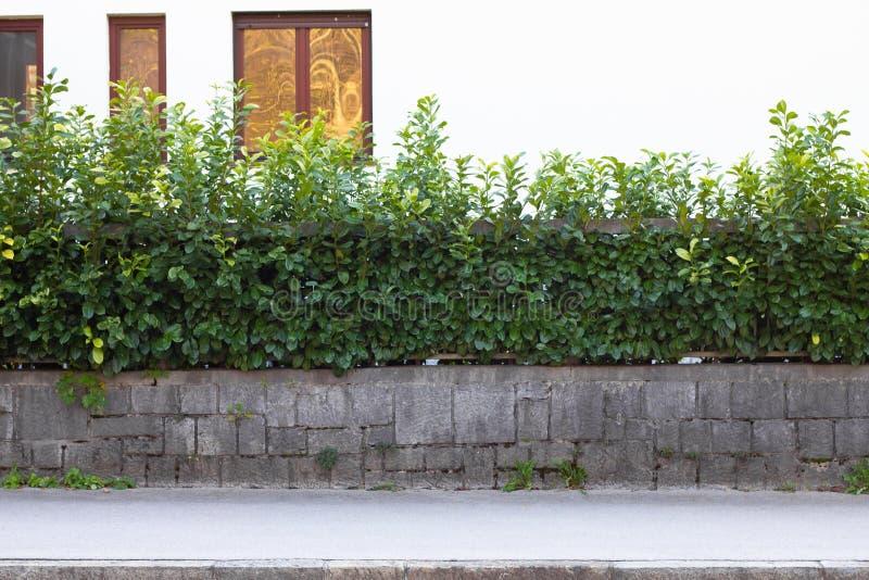 Stads- bakgrund, tom stads- gata med stakettegelstenväggen och växter royaltyfri bild