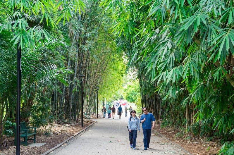 Stads Botanische Tuinen in centraal Brisbane, in Queensland, Australië royalty-vrije stock foto's