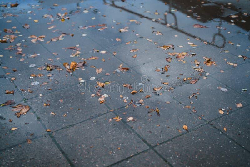 Stads- höstbakgrund med stupade sidor på våt trottoar i en stad royaltyfri foto