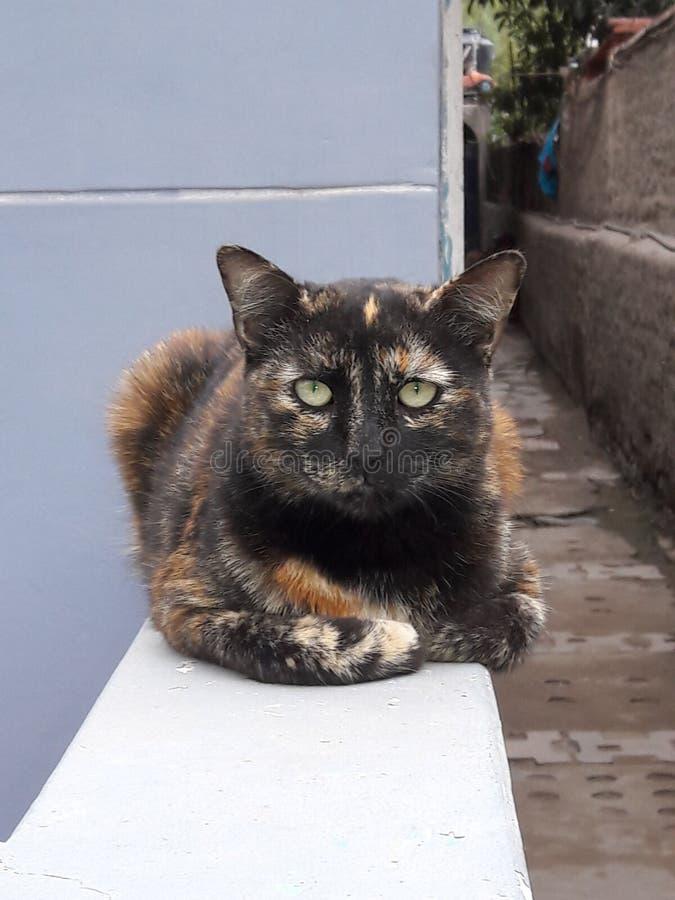 stads- katt arkivfoto