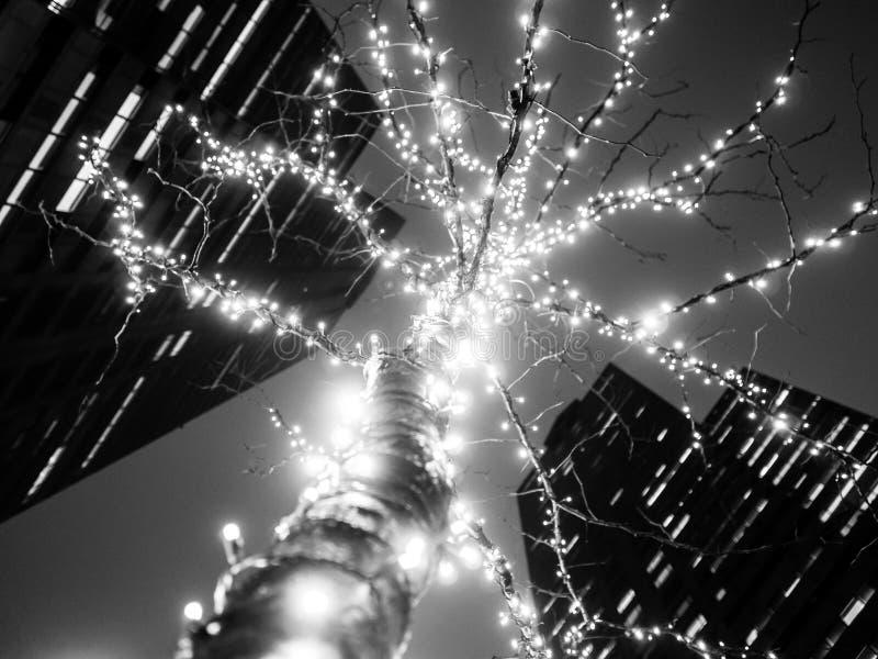 Stads- trädljus på natten - B&W fotografering för bildbyråer