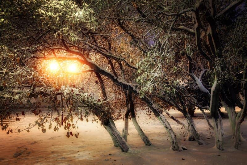 Stadsavenyn med träd fotografering för bildbyråer