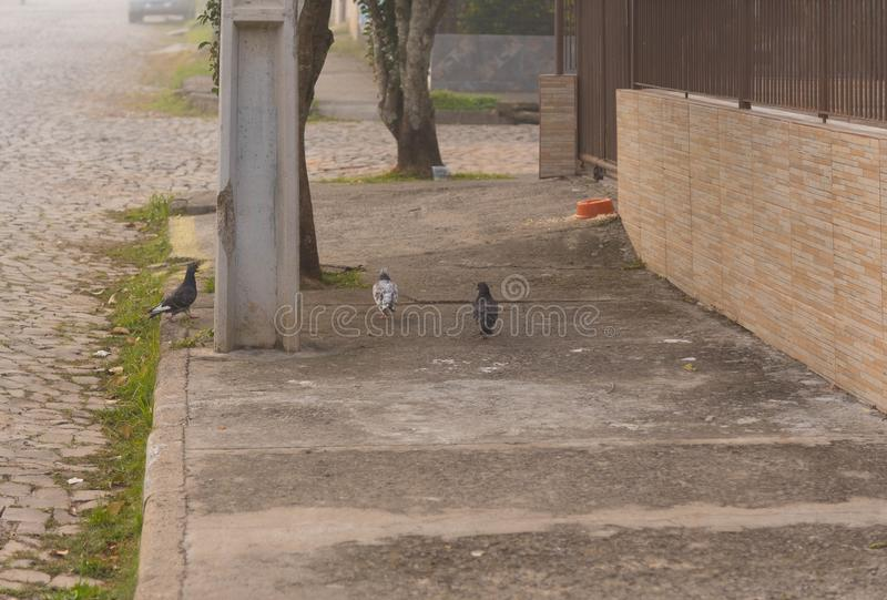 Stadsduvorna på den fot- trottoaren 02 fotografering för bildbyråer