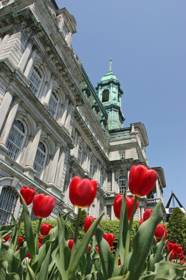 Stadshus av Montreal i vår med röda tulpan på förgrunden royaltyfri foto