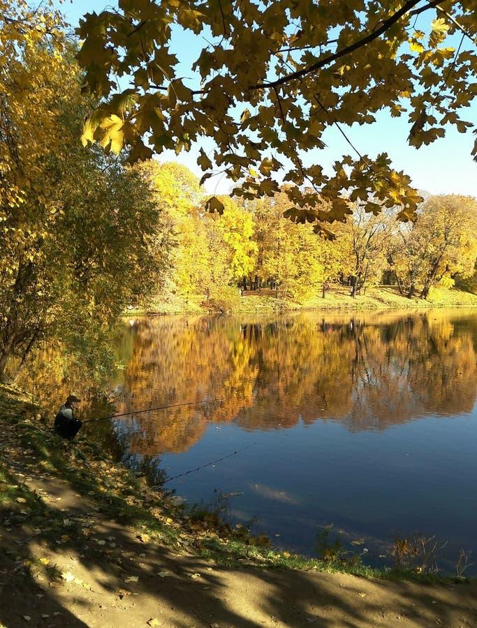 Stadspark in de herfst, vijvers onder de schaduw van bomen stock fotografie
