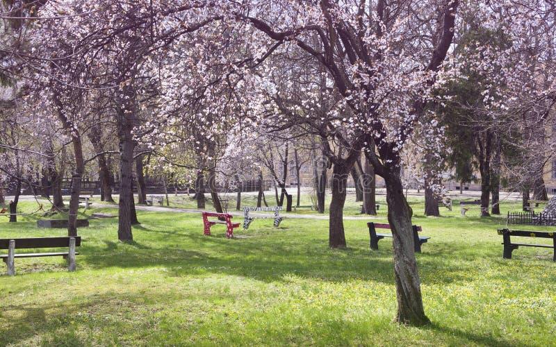 Stadspark met tot bloei komende bomen in de lente stock afbeelding