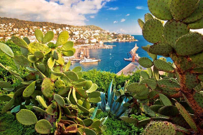 Stadt der Nizza bunten Ufergegend- und Segelsporthafenansicht durch Mittelmeerkaktus und Agave lizenzfreies stockfoto