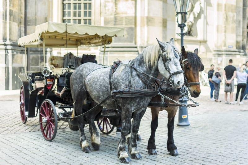 Stadt Dresden Deutschland Sachsen Ein Paar Pferde vorgespannt zu einem Wagen lizenzfreie stockfotos