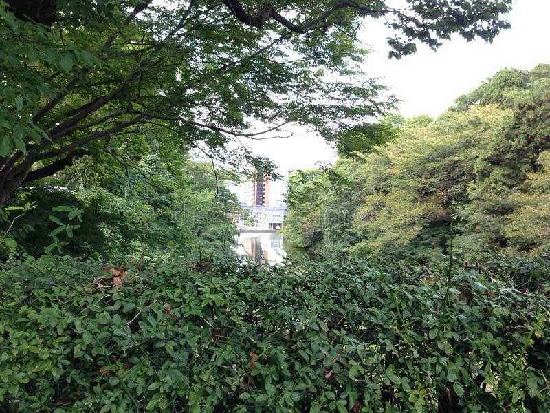 Stadt hinter den Bäumen stockfotografie