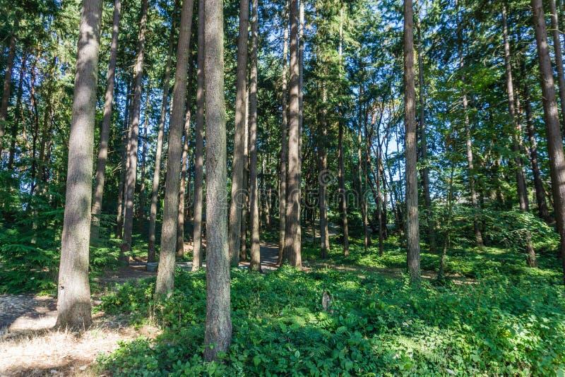 Stadt-Park-Bäume 3 stockfoto