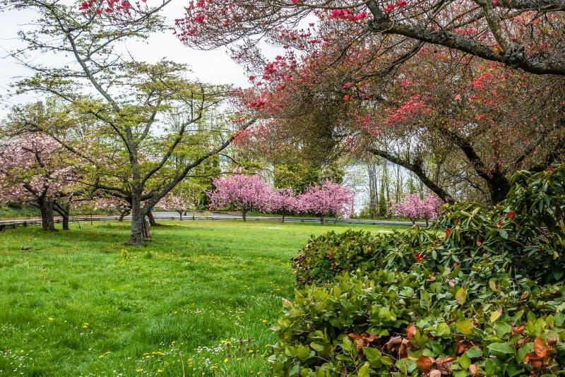 Stadt-Park in Frühjahr 2 stockbild