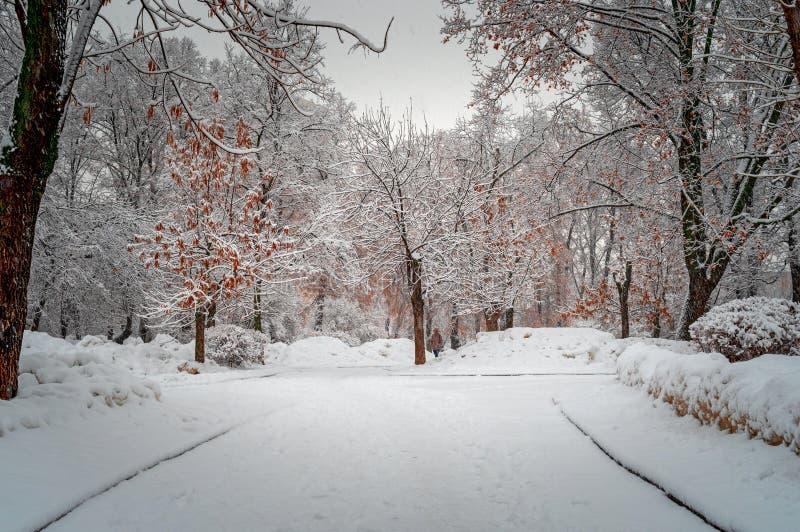 Stadt-Park, nachdem Schneesturm mit weißem Schnee bedeckt ist Schnee nach Schneefällen auf Stadtstraße Schöne kalte Winterszene stockbild