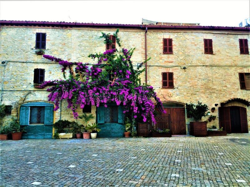 Stadt Torre di Palme in der Region Marken Italien Purple Bougainville, alte Azurblau-Tür und Schönheit stockbild