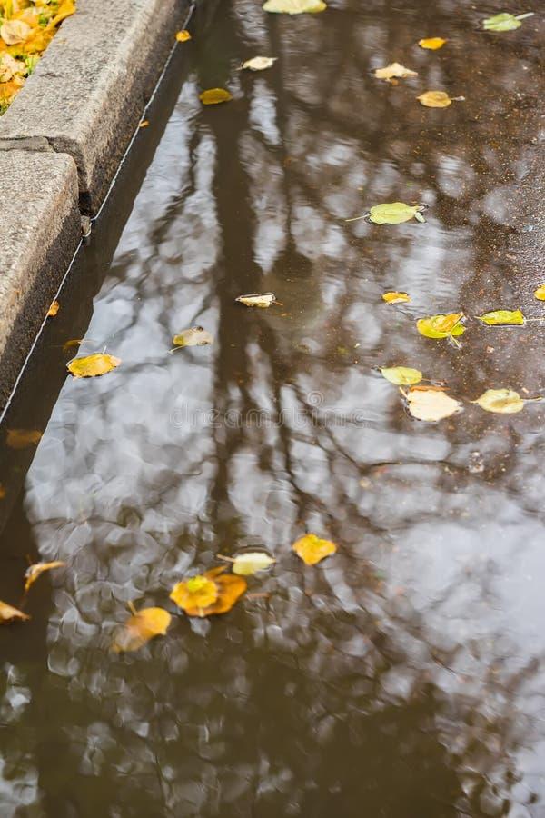 Stadtbürgersteig mit Pfütze mit Bäumen, Himmelreflexionen Gelbblätter, die in Pfütze fallen Sonniges goldenes Herbstwetter lizenzfreies stockfoto