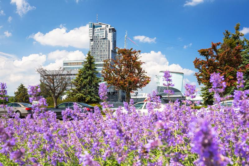 Stadtbild von Gdynia mit purpurroten Lavendel flovers, Polen lizenzfreie stockfotos