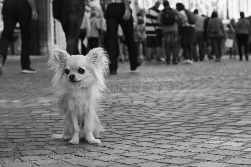 Stadthund stockfotos
