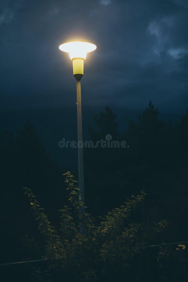 Stadtlichtlampe am Abend umgeben durch Busch lizenzfreie stockbilder