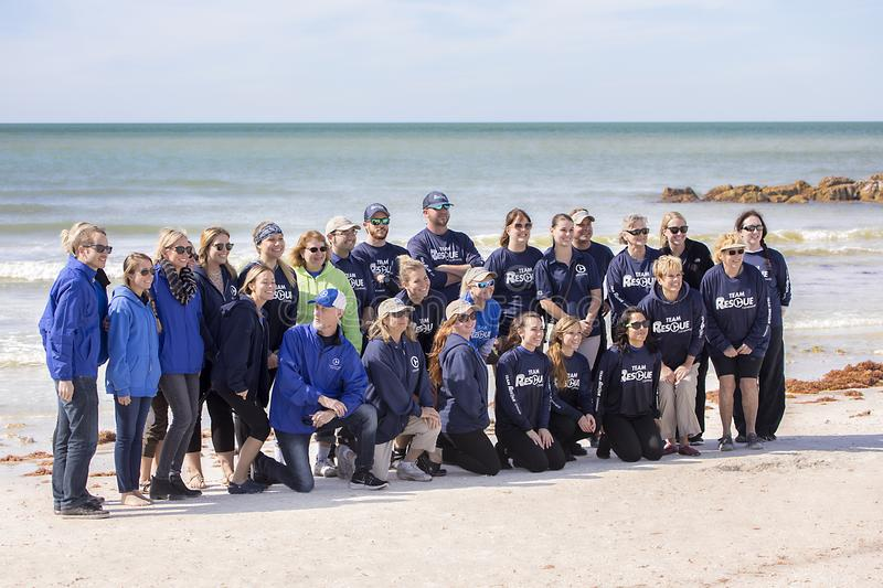 Staff and Volunteers From The Clearwater Marine Aquarium. Pose as a group after successfully releasing 29 green sea turtles back in the Gulf of Mexico on royalty free stock images