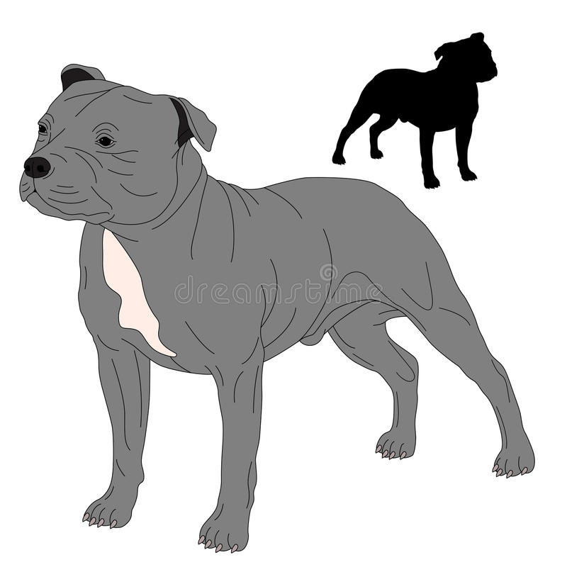 Staffordshire Bull Terrier dog silhouette. Drawing realistic vector illustration stock illustration