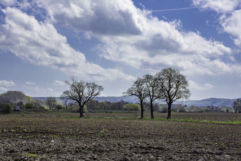 Staffordshire landschap in de lente, Binnenlanden Engeland royalty-vrije stock afbeelding