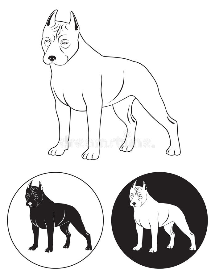 Staffordshire Terrier Royalty Free Stock Image
