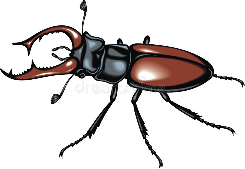 Download Stag beetle stock vector. Illustration of horn, nature - 31583141
