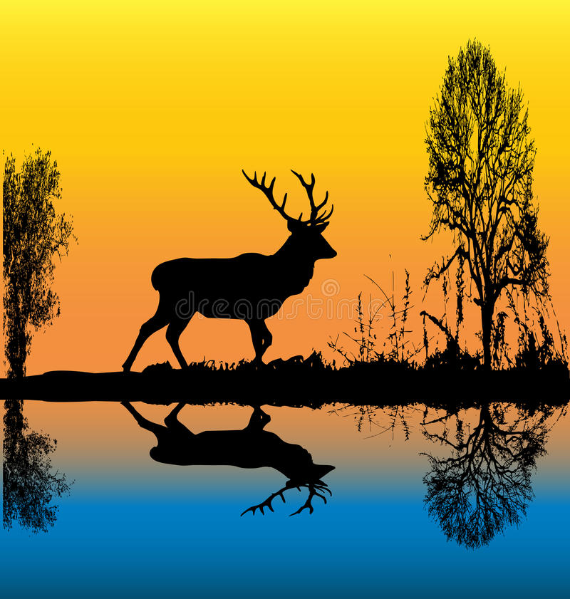 Download Stag At Dawn Royalty Free Stock Photo - Image: 9974215