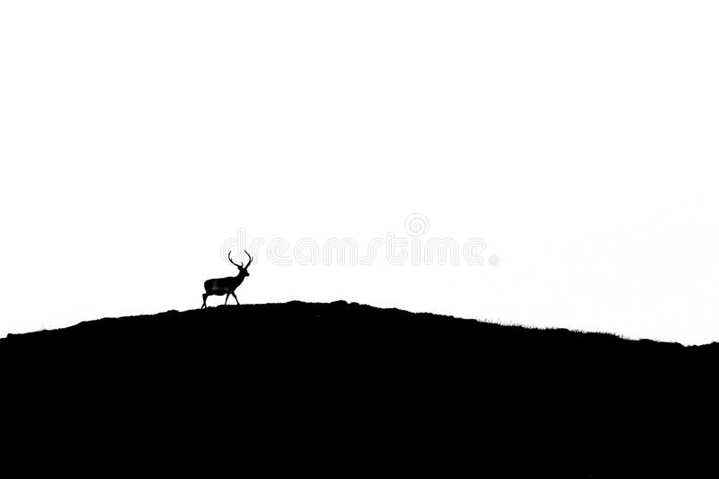 Download Stag silhouette stock image. Image of arrive, rock, contrast - 24629777
