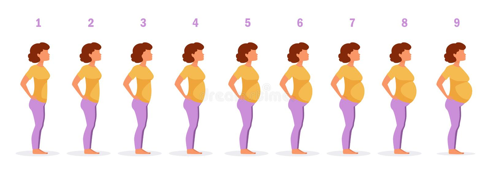 Stage of pregnancy Vector. vector illustration