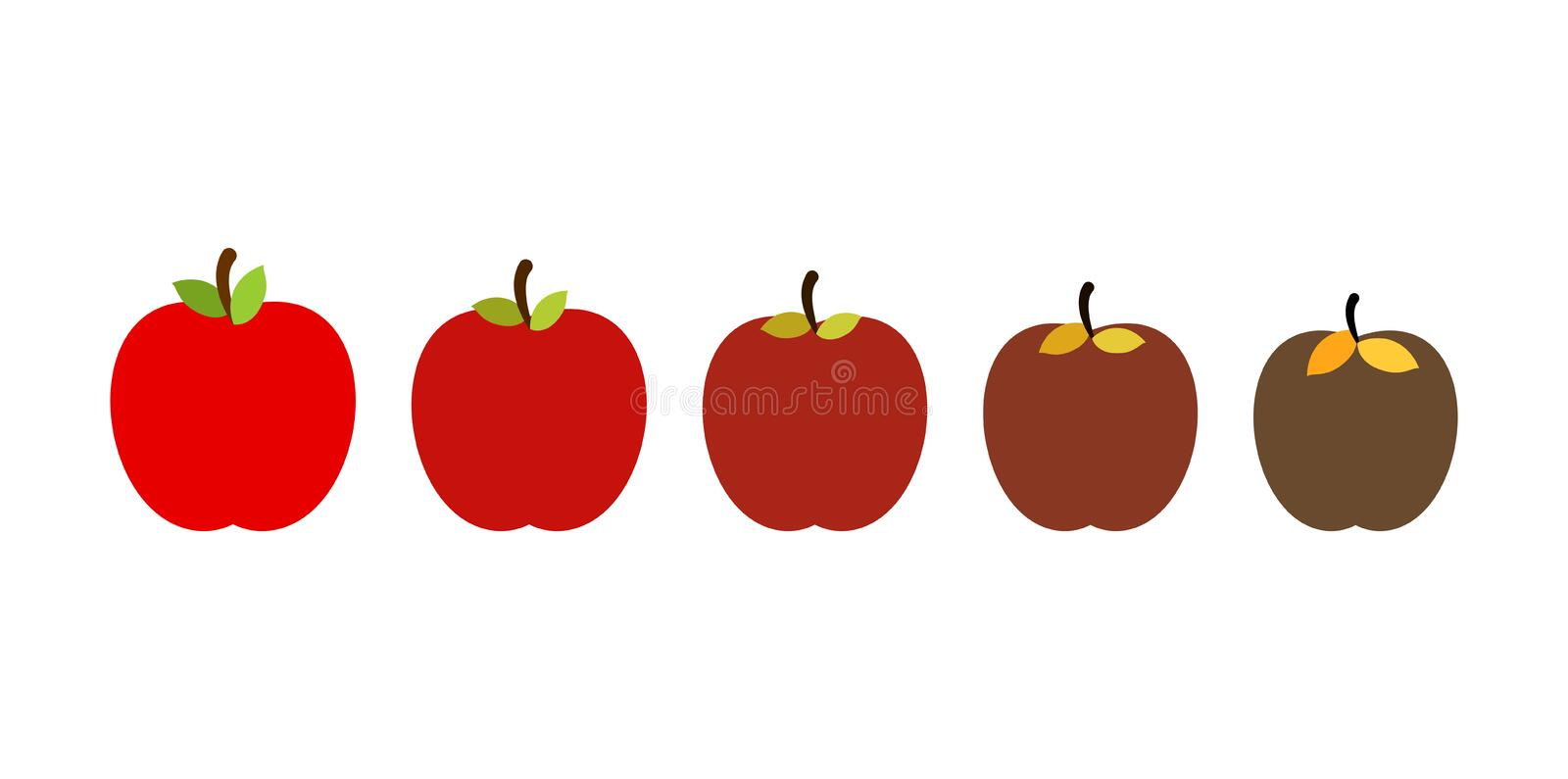 Stage of rotting apple. Beautiful red fresh fruit and old rotten fruits.  vector illustration