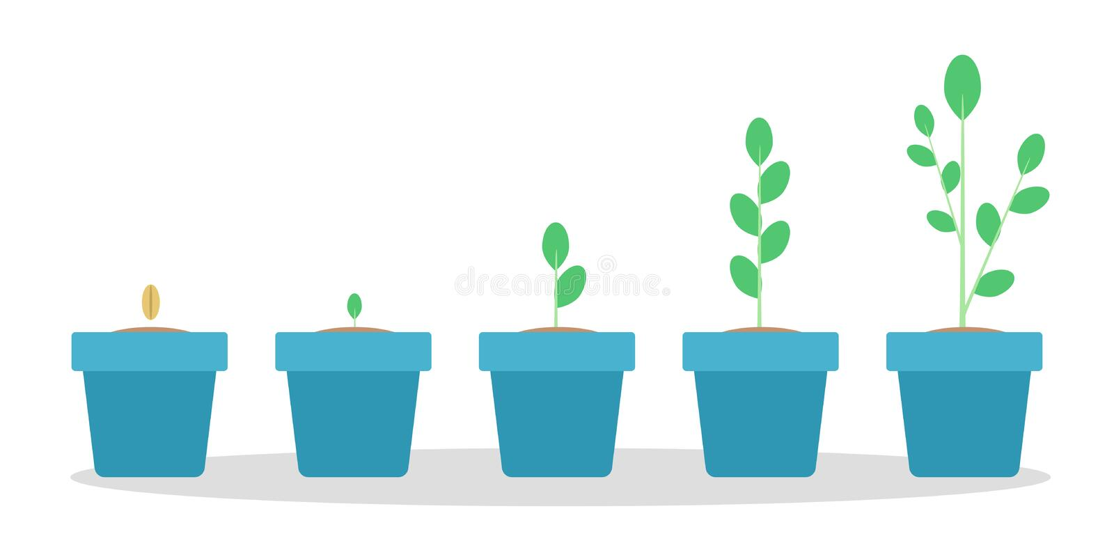 Stages of green plant growth in the blue pot. From seed to sprout. Isolated flat vector illustration vector illustration