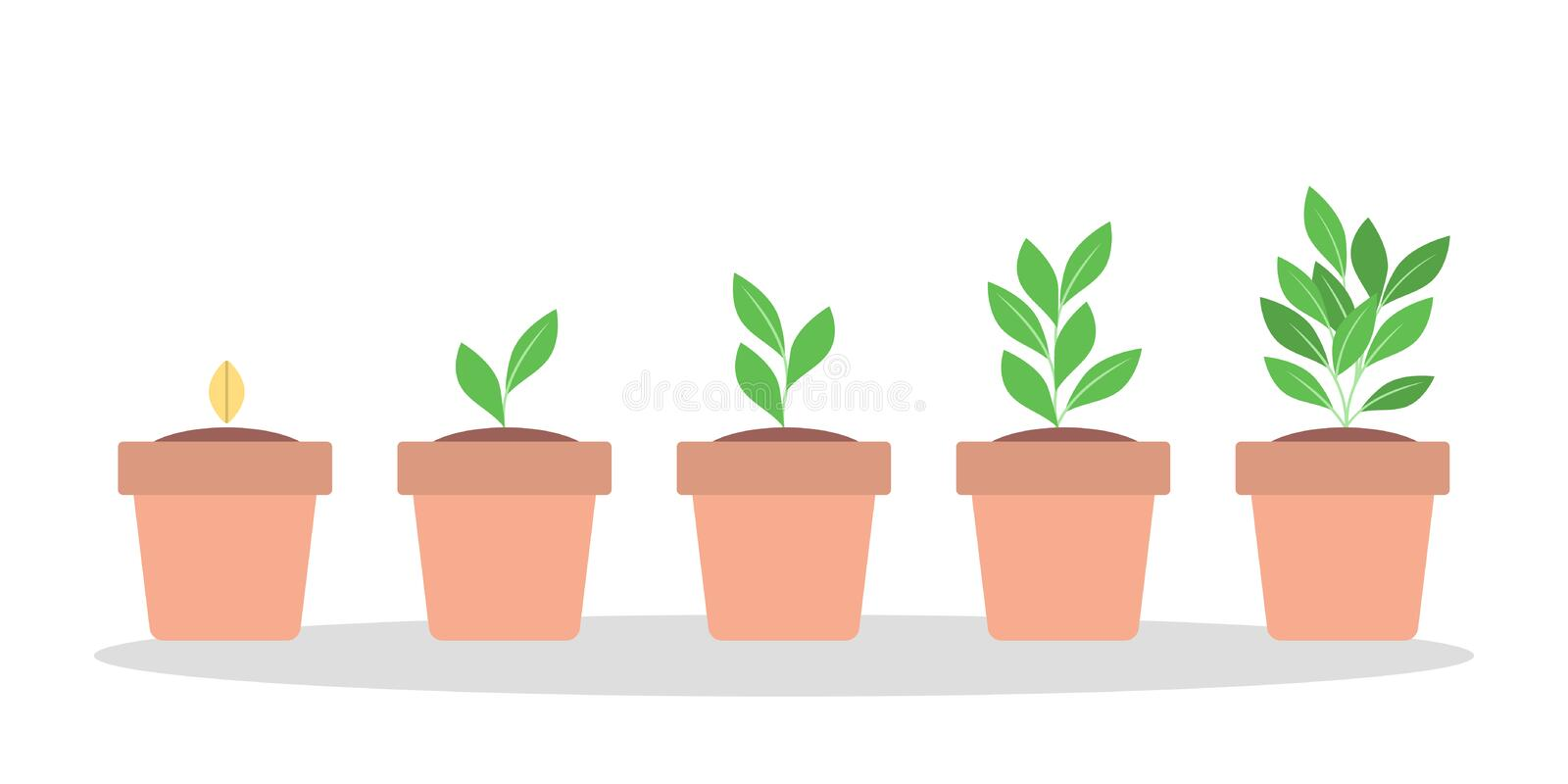 Stages of green plant growth in the pot. Stages of green plant growth in the red pot. From seed to big sprout. Isolated flat vector illustration stock illustration