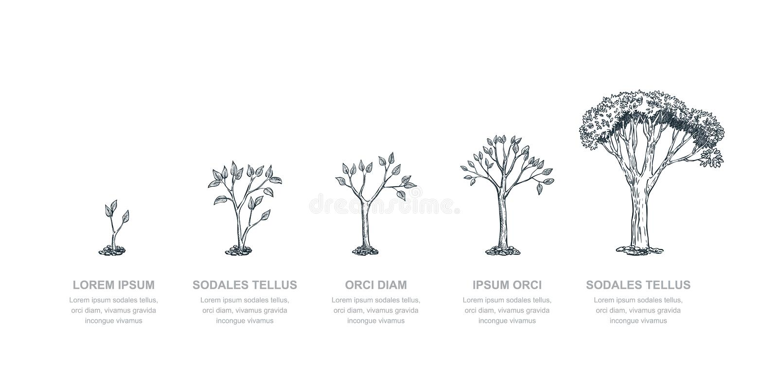 Stages of growing tree, vector sketch illustration. Investment and finance growth business concept. Infographic template royalty free illustration